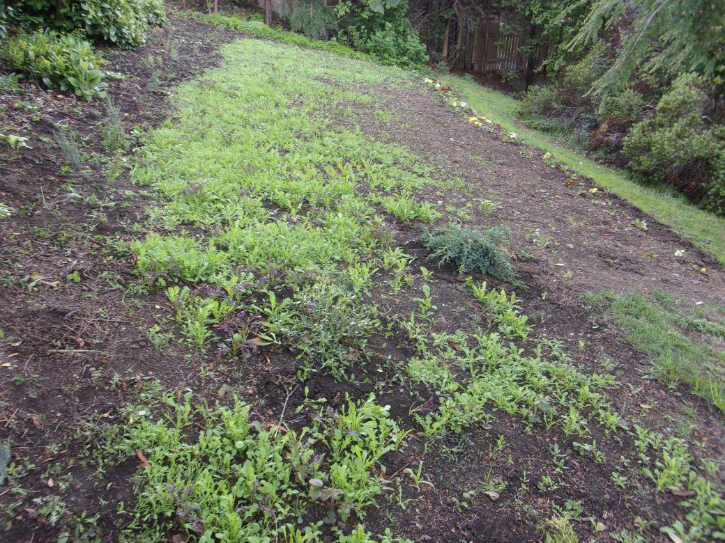 Meadow flowers_001_01.JPG