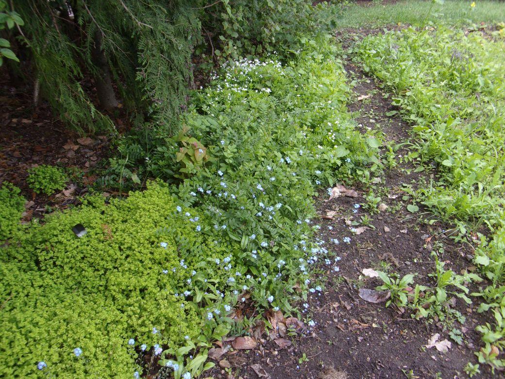 Meadow flowers_003.JPG