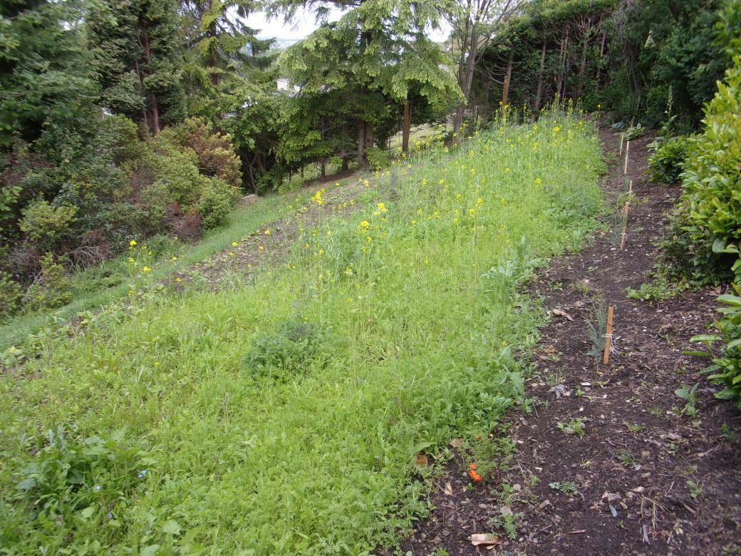 Meadow flowers_005.JPG