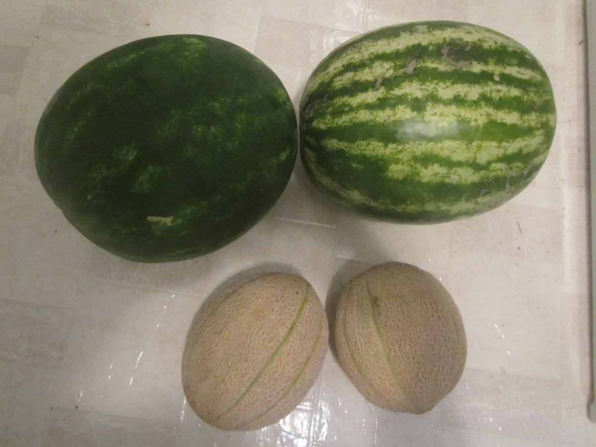 melons.JPG