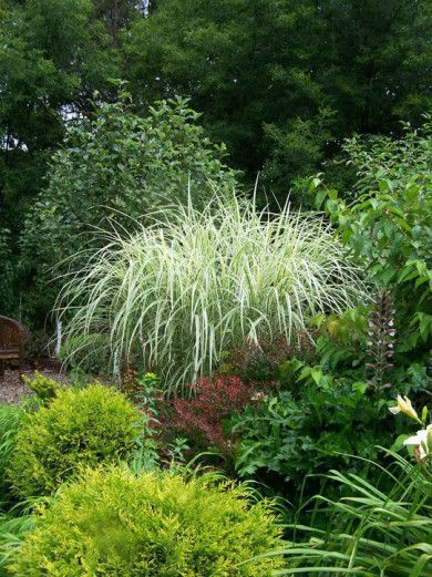 Ornamental grasses gardening forums for Ornamental grass garden layout