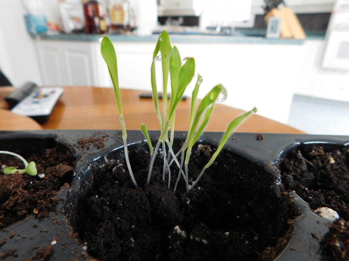 Mystery Seedling (1).JPG