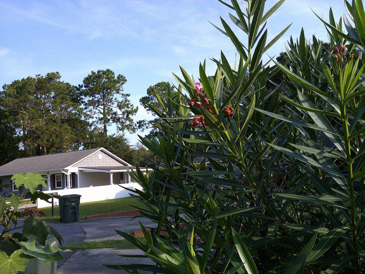 oleander bush.JPG