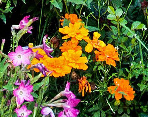 orange_flower_01.jpg