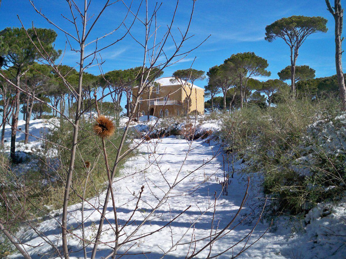 Pine and chestnut on Mount Lebanon in January.JPG