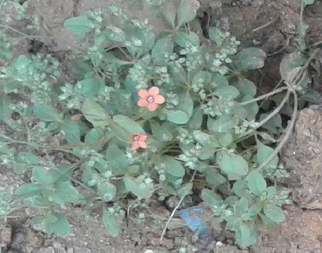 Plant 2_Red Flower.jpg