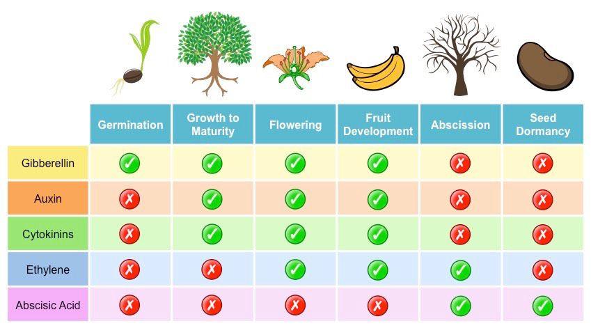plant-hormones_med (1).jpeg