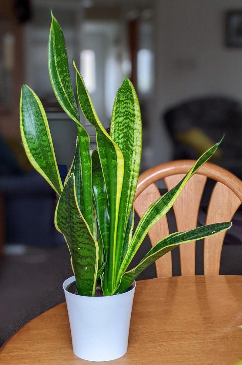 Plant Main.jpg