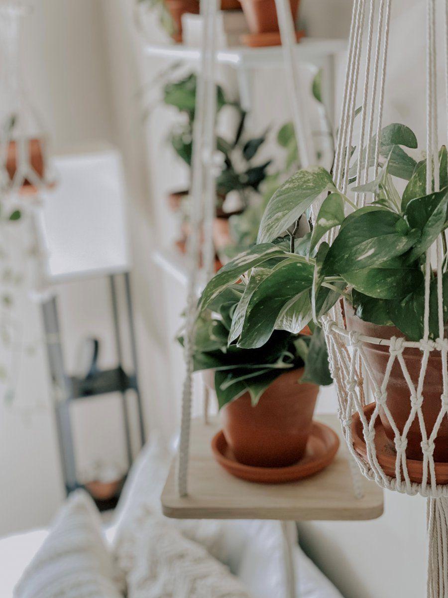 PlantMomB.jpg