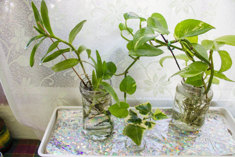 Growing your indoor plants in water gardening forums for What plants can i grow indoors