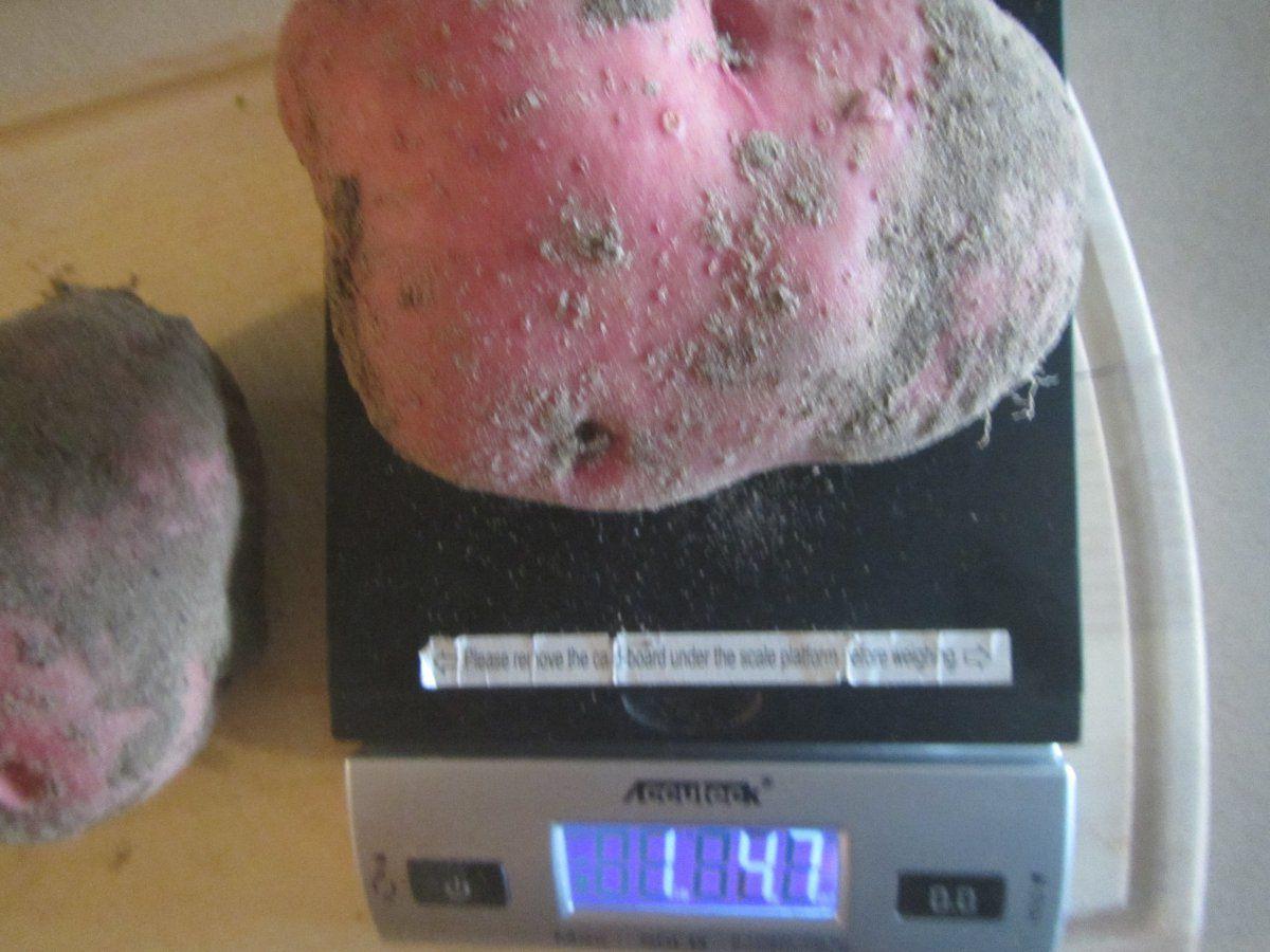 potato baker.JPG