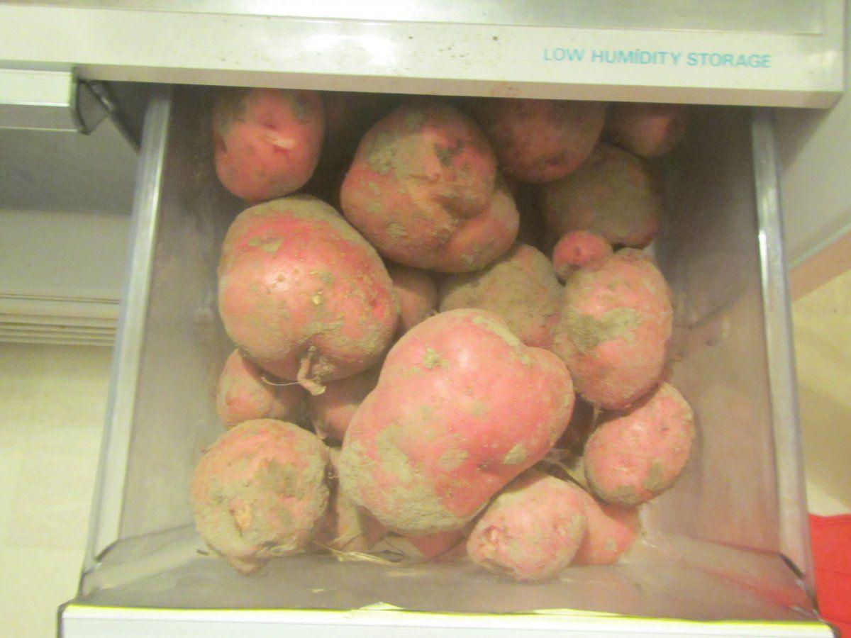 potato crisper.JPG