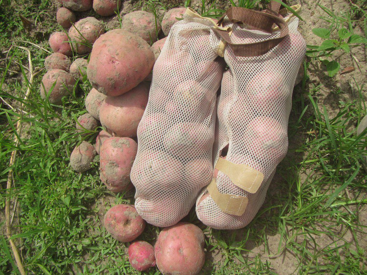 potatoe bags.JPG