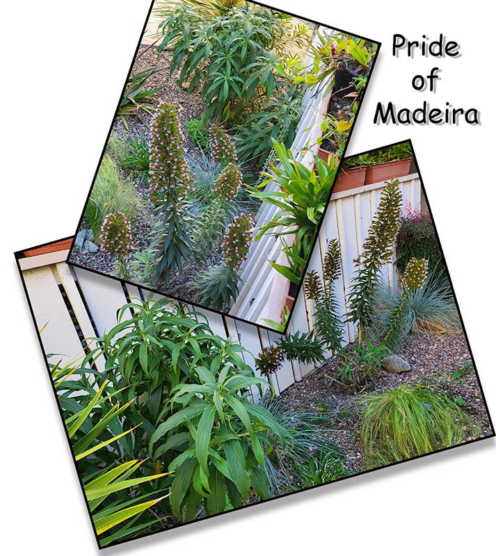 Pride of Madeira issue.jpg