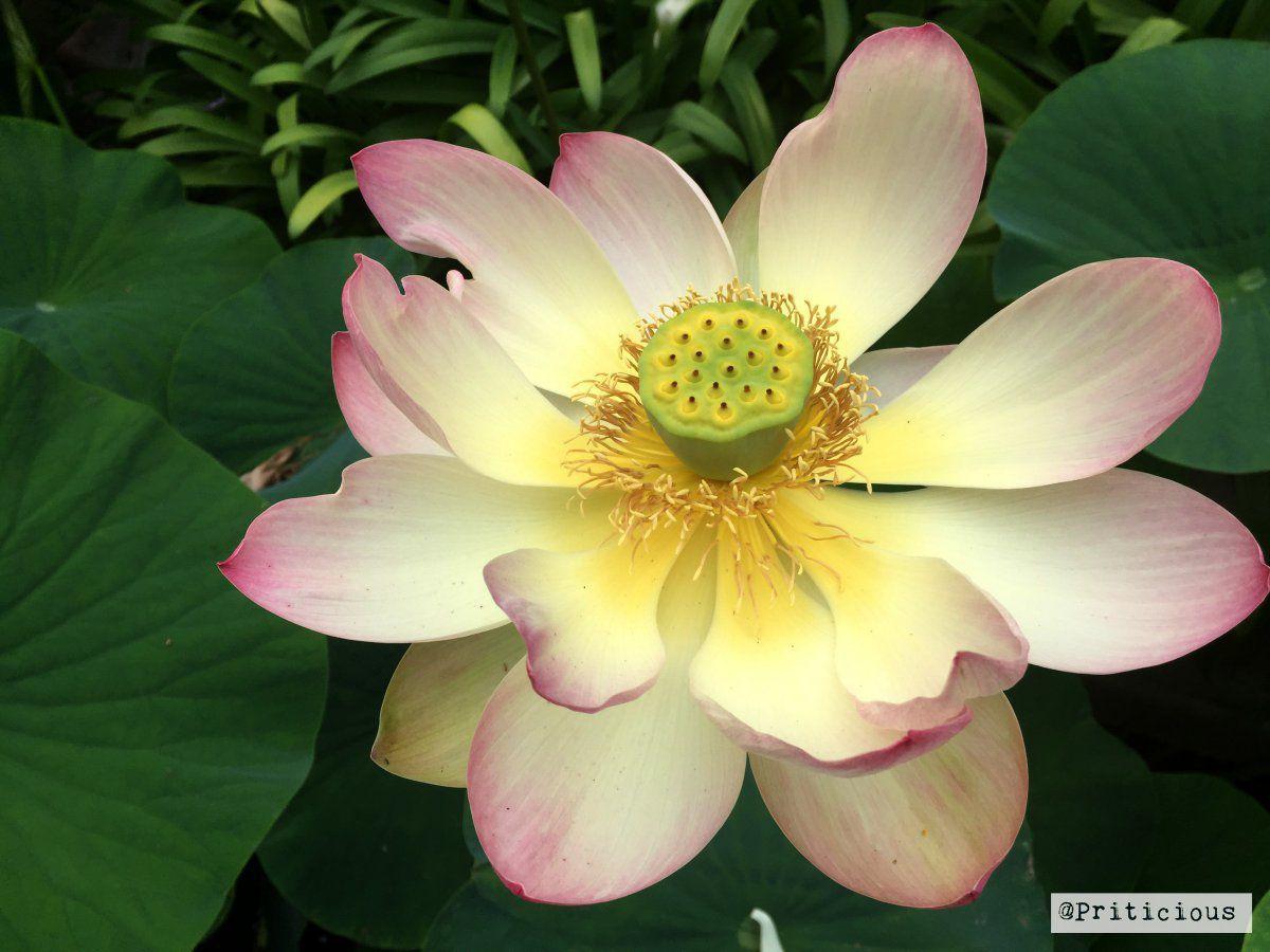 priticious_flower.jpg