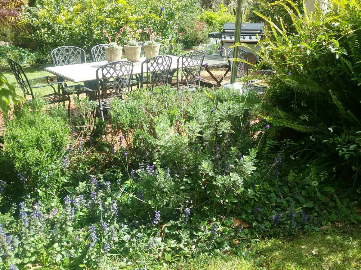 Gap in Rosemary Hedge | Gardening Forums