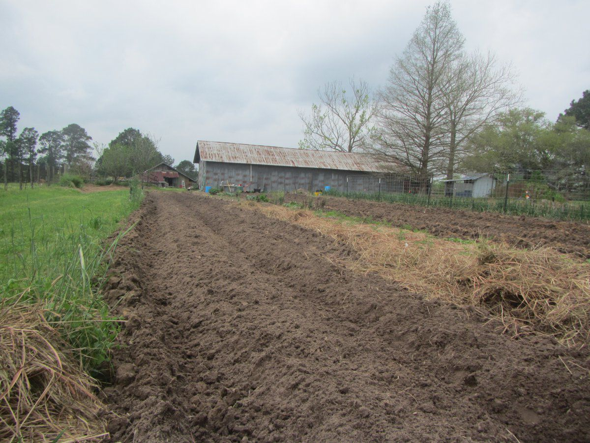 seed bed 2 2020.JPG
