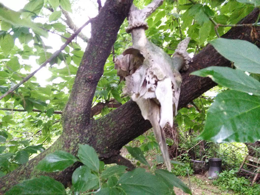 Quick Tip To Keep Squirrels From Eating Your Plants