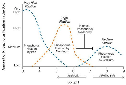 soil-ph-phosphorus.jpg