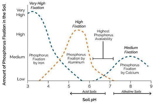 soil-ph-phosphorus.jpg