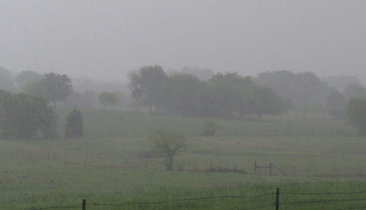 Spring Shower.jpg