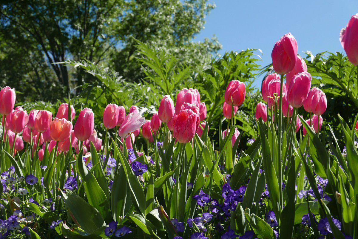 spring_1-jpg.12091