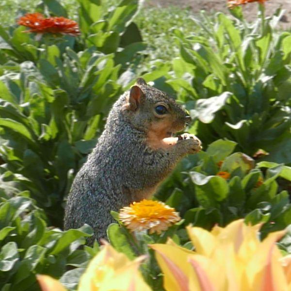 squirrel_1x1.jpg