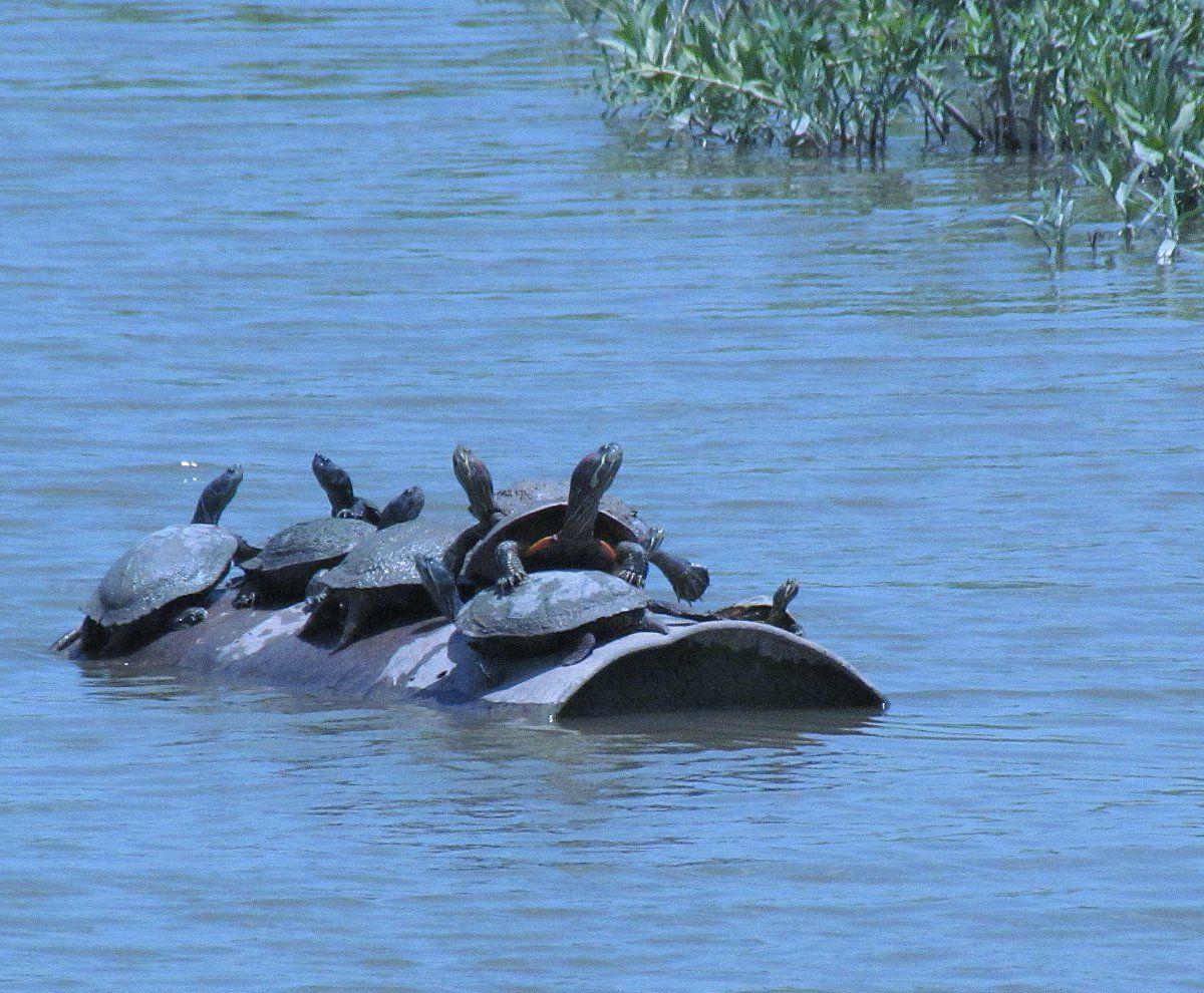 turtle_gang_1.jpg