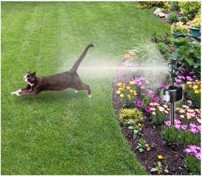 Keep Your Cat In Your Yard