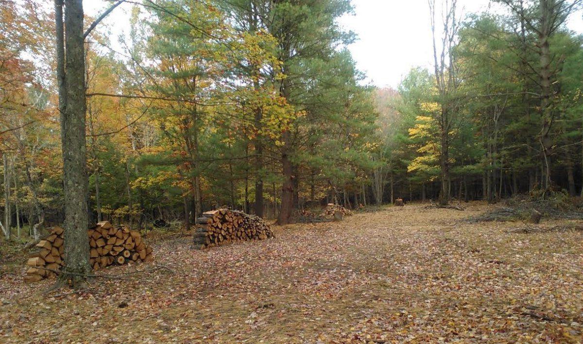 woodedpark.jpg