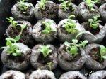 seeds-in-trays.jpg