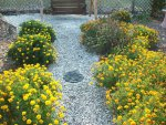 tomatos pond and landscaping 9-2015 057.JPG