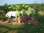 tomatos pond and landscaping 9-2015 038.JPG